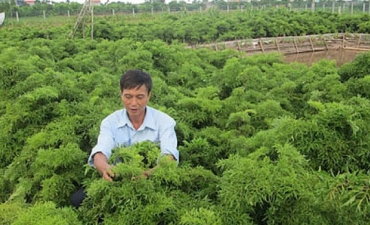 Beginning with only VND10 billion, this company has utilized traditional medicinal plants to build up a company of more than USD28 million